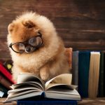 10 Smartest Small Dogs