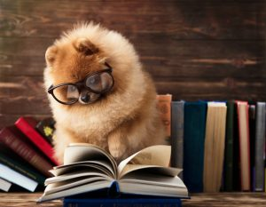 smart dog breed