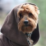 Top 15 Star Wars Inspired Dog Names