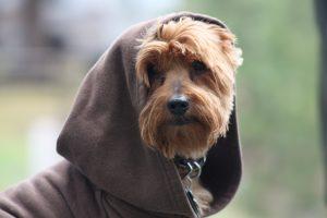 star wars dog names