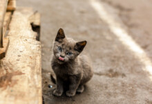 What to do When a Stray Cat Adopts You?