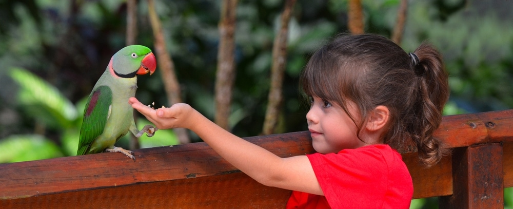 Alexandrine Parrot and kid