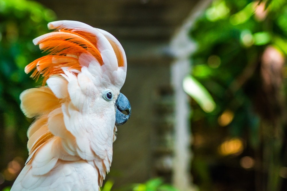 Cockatoo on tree