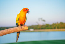 Conure Care Guide - Types, Lifespan & More