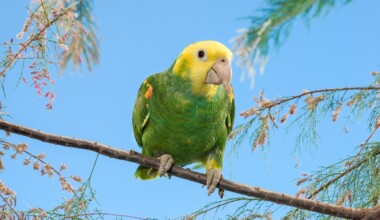 Double yellow headed parrot on stick