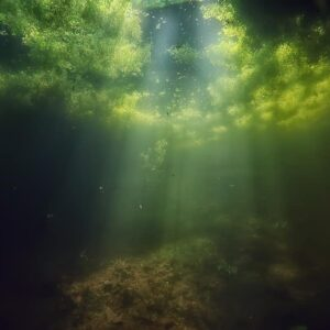 Algae Guide - 7 Common & Different Types