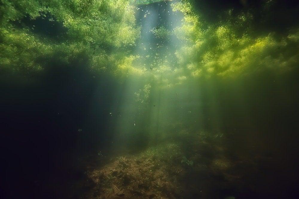 Green aquarium algae