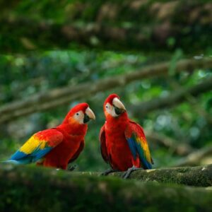Scarlet Macaw - Care Guide, Info & Price