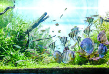 Freshwater Aquarium Cycling: How to prepare for new fish