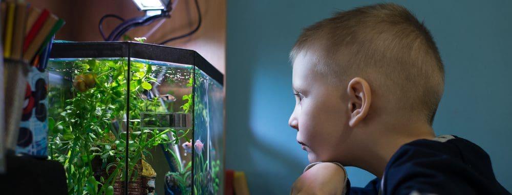aquarium fishes 1 e1576511704243