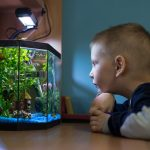 7 Centerpiece Fish for Your Community Aquarium