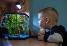 7 Centerpiece Fish for Your Community Aquarium