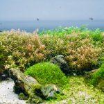 The Best Aquatic Fertilizers - Buyers Guide