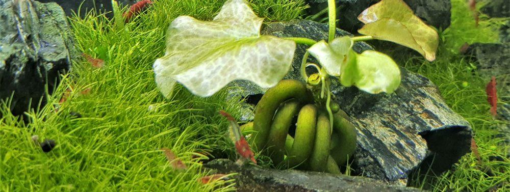 banana plant e1576425360867