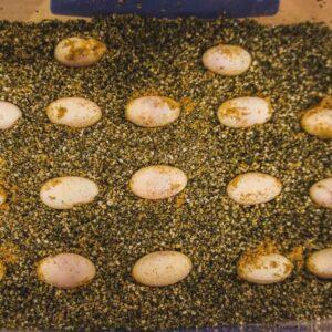 How Many Eggs Do Bearded Dragons Lay?