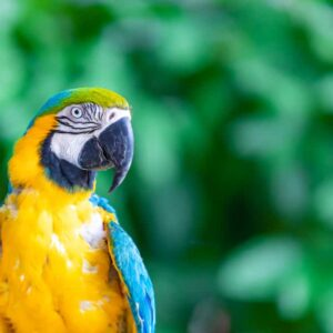 Blue & Gold Macaw - Care Guide & Info