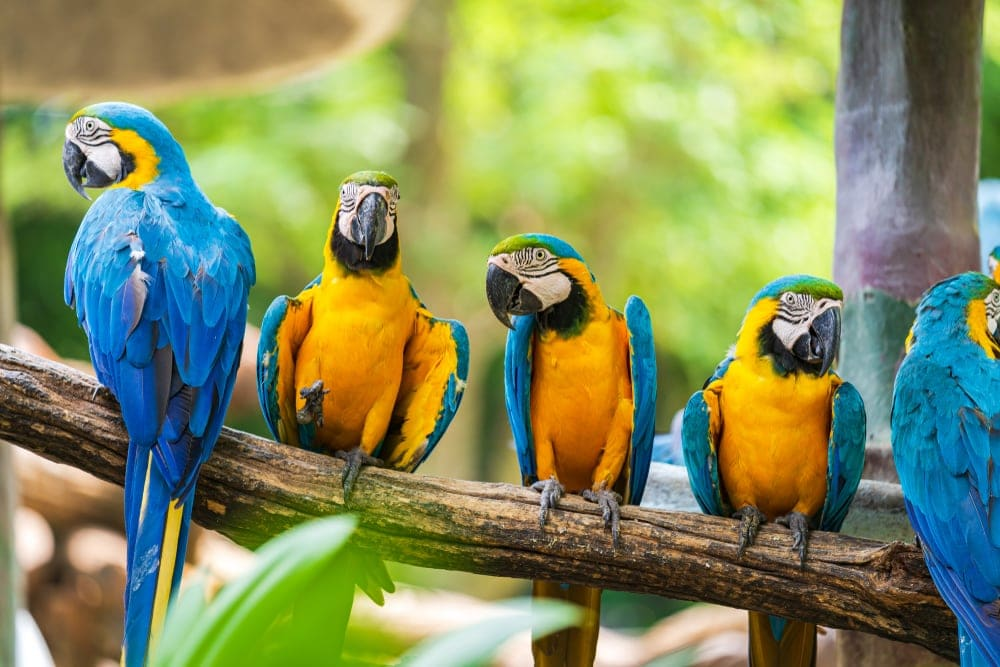 blue and gold macaw on stick