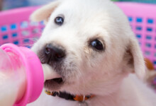 What Kind Of Milk Do I Give A Newborn Puppy?