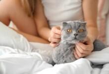 How to Calm a Female Cat in Heat