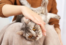 Why Your Cat Wants so much Attention