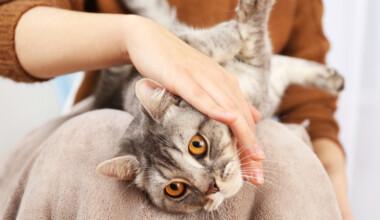 cat cuddle 2