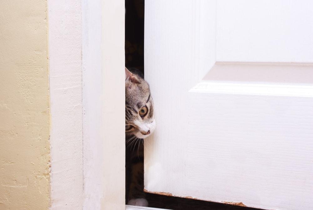 cat door opening