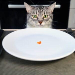 What to do if Your Cat Doesn't Want to Eat