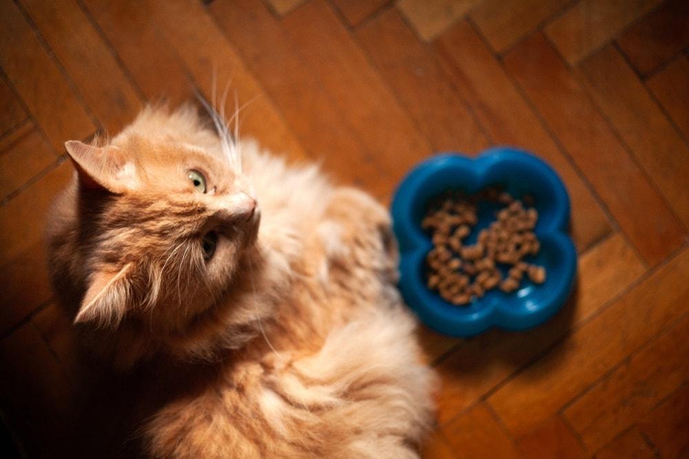 cat eating 2