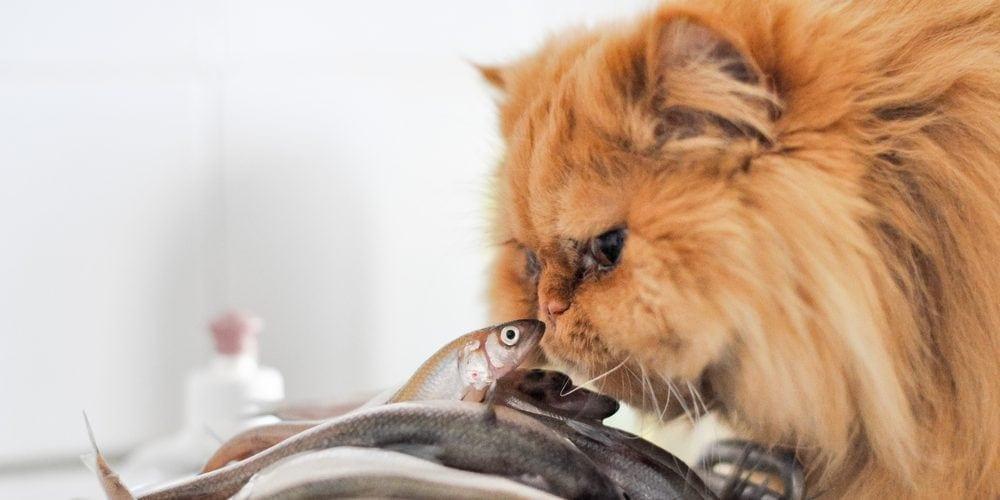 cat eating fish 1 e1575214221103