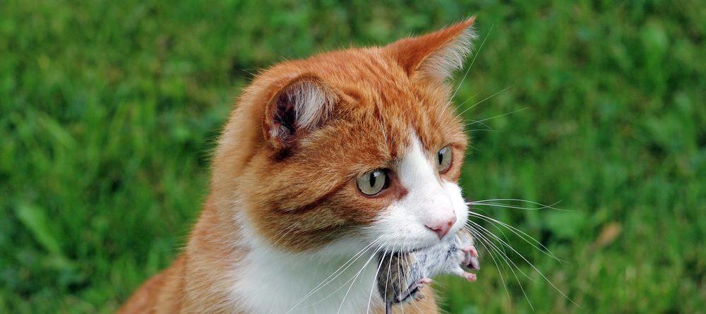 cat hunt mouse 1 e1575210720196