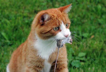 What Do Cats Eat in the Wild?