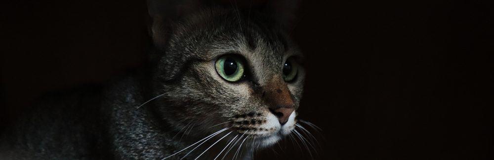 cat night 1 e1575299898760