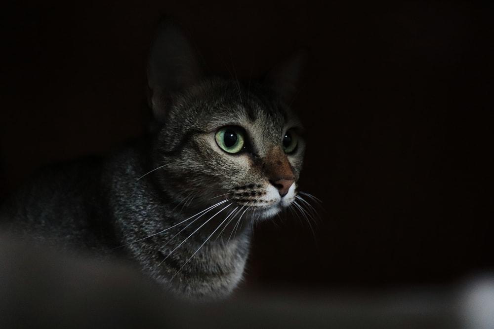 cat night