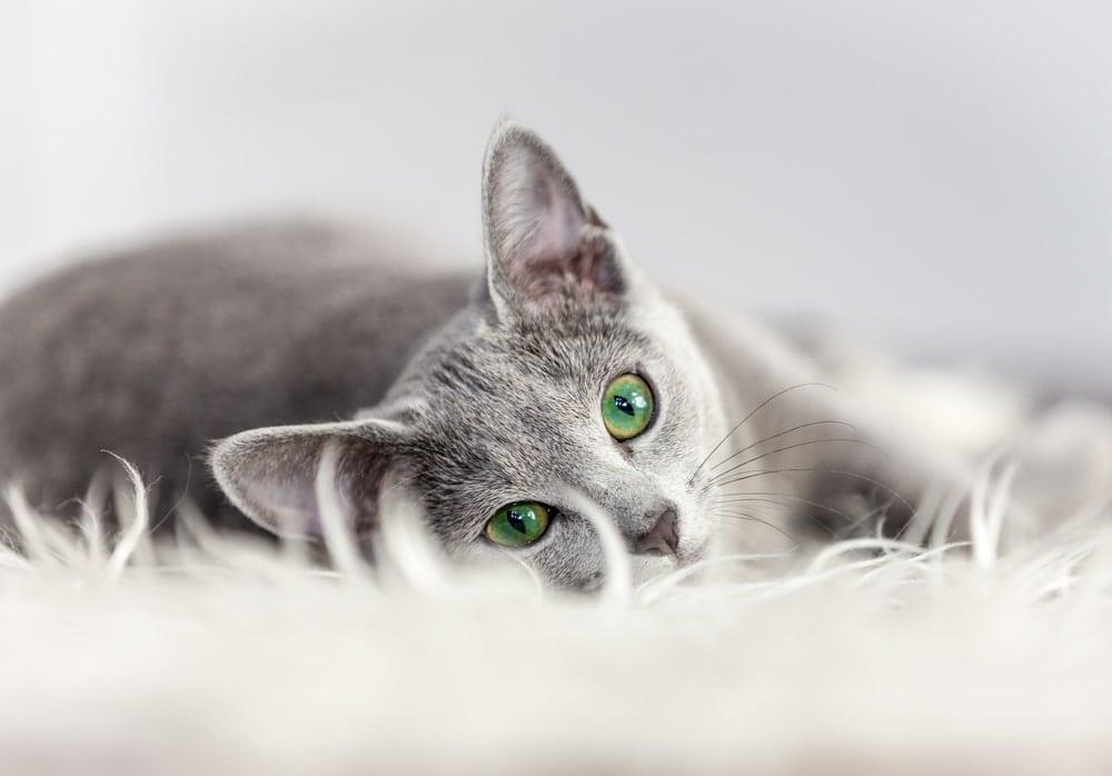cat on floor mat