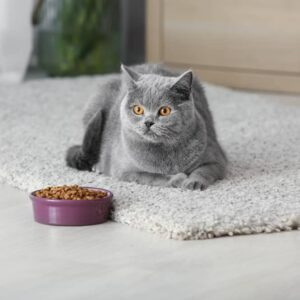 How Often Should you Feed a Cat?