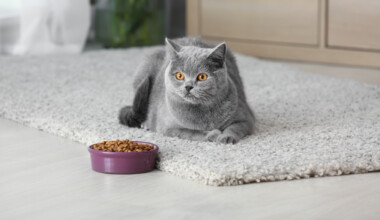 cat on mat with food
