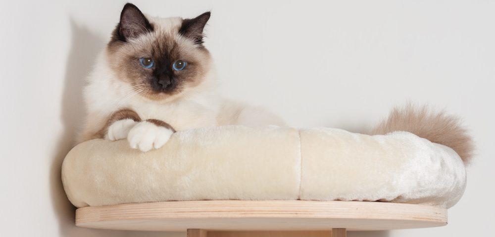 cat on shelves 1 e1575296477231
