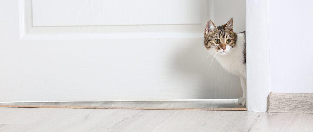 cat outside door 1 e1575211470349