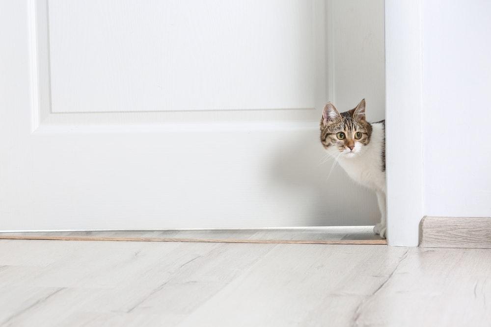 cat outside door