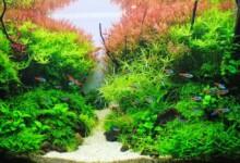 10 Best Aquarium Fish for Beginners