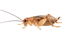 Best Places To Buy Live Crickets Online