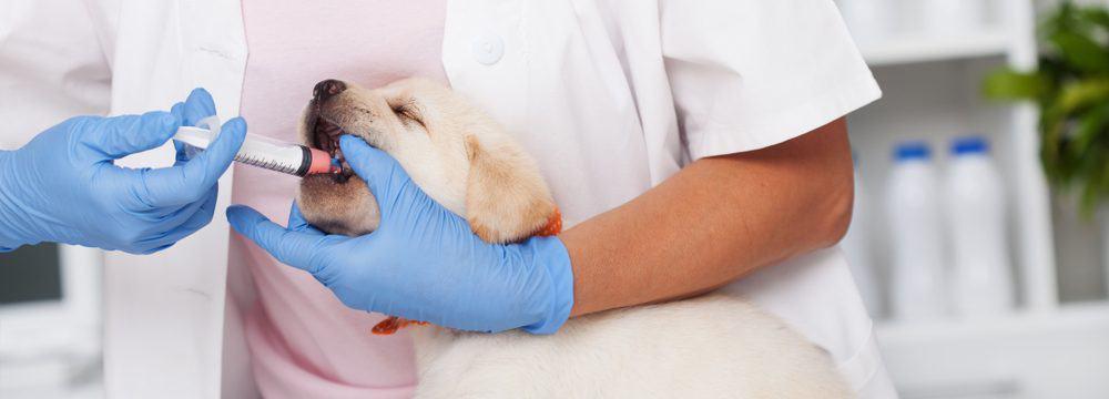 deworming puppy 1 e1575995415214