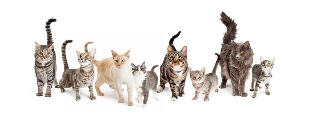 different cat breeds
