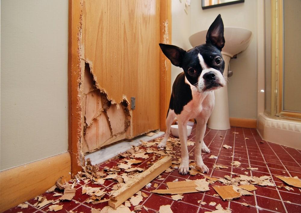 dog destroyed house