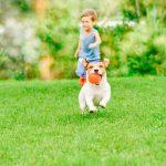 How to Build a Backyard Dog Potty Area