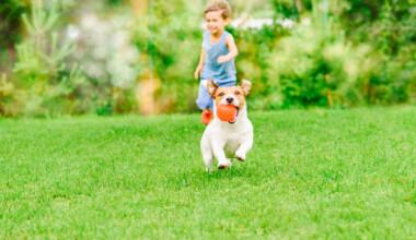 dog running backyard