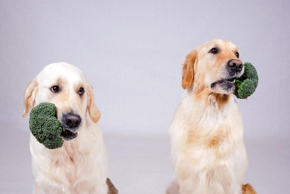 dogs eating broccoli