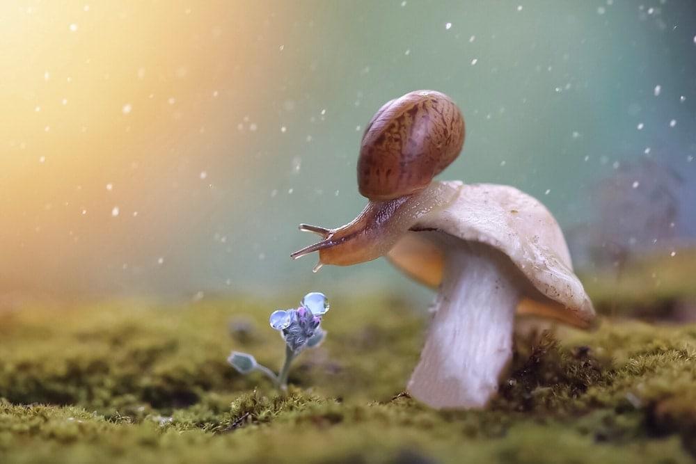 fantasy mysteri snail