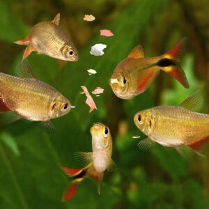 How to Nitrogen Cycle your Aquarium