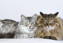 Male vs. Female Cats - Behavioral Differences